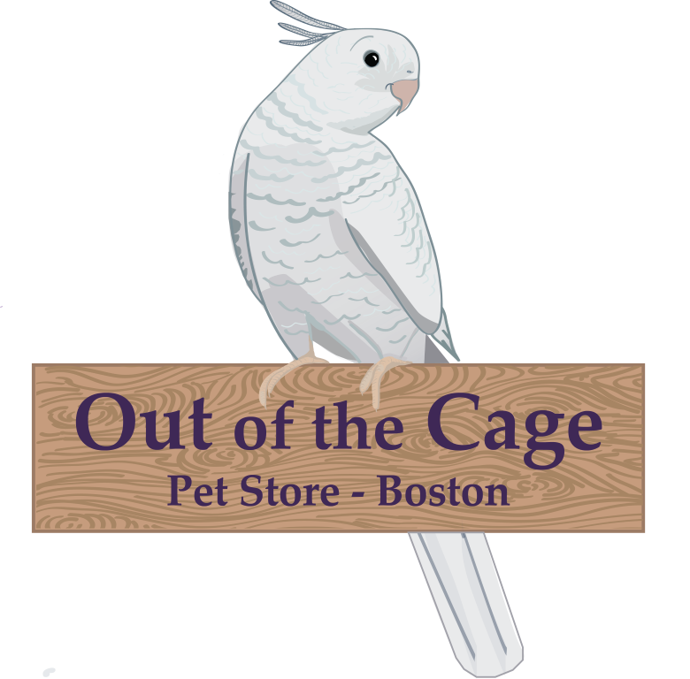 Out of the Cage Pet Store Boston Logo – Initial Development