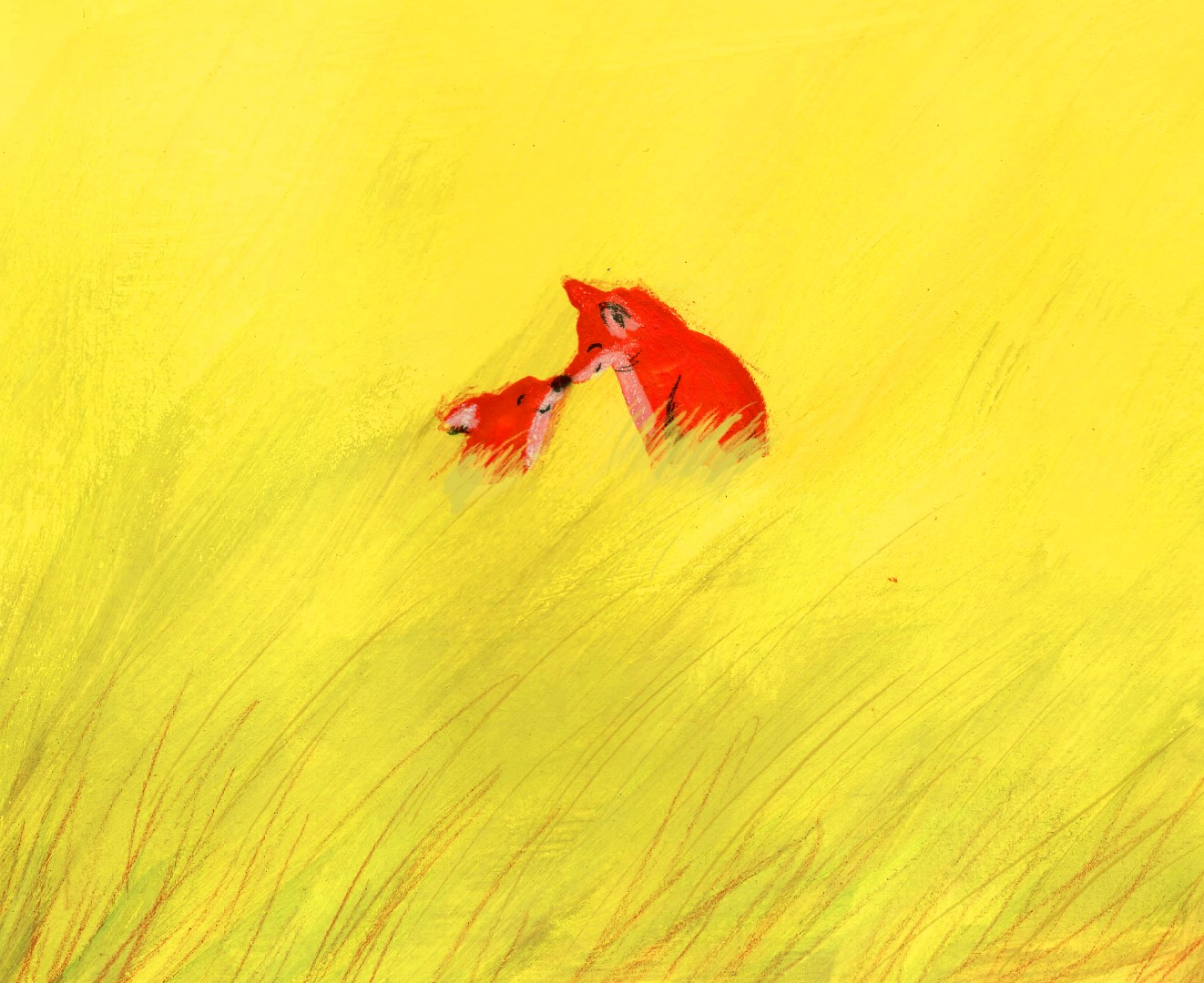 foxes in field