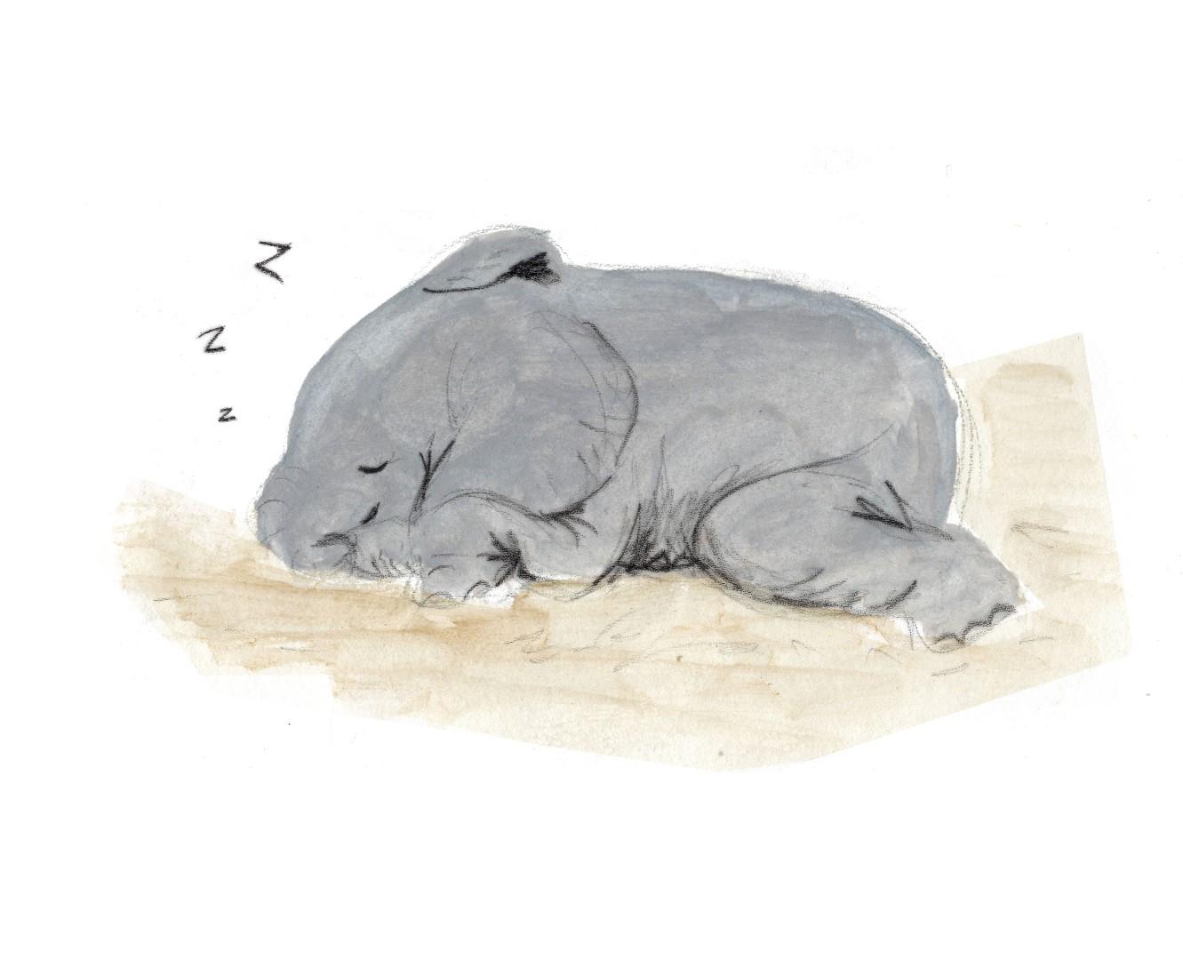 elephante (Large)