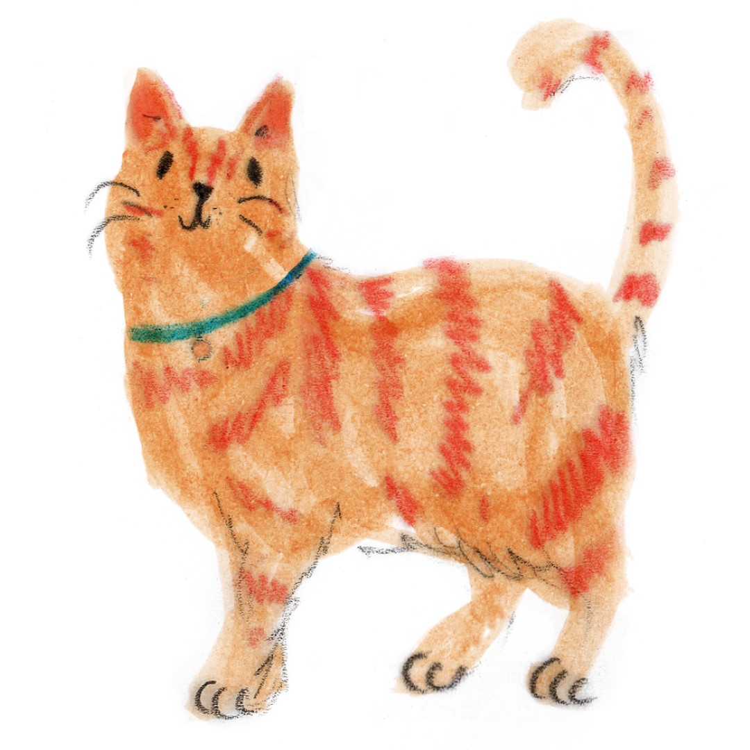 cat (Large)