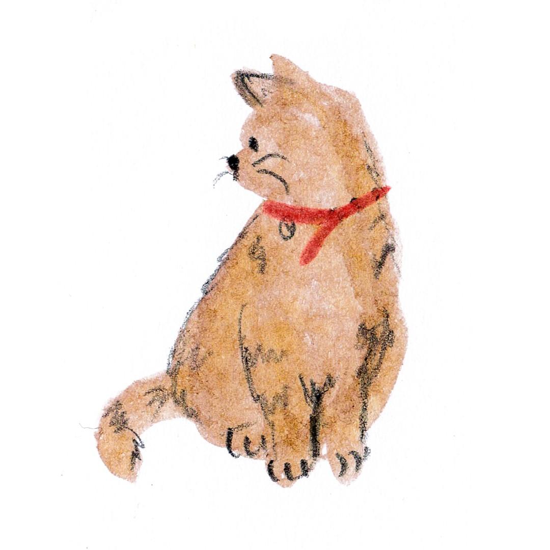 catt1 (Large)