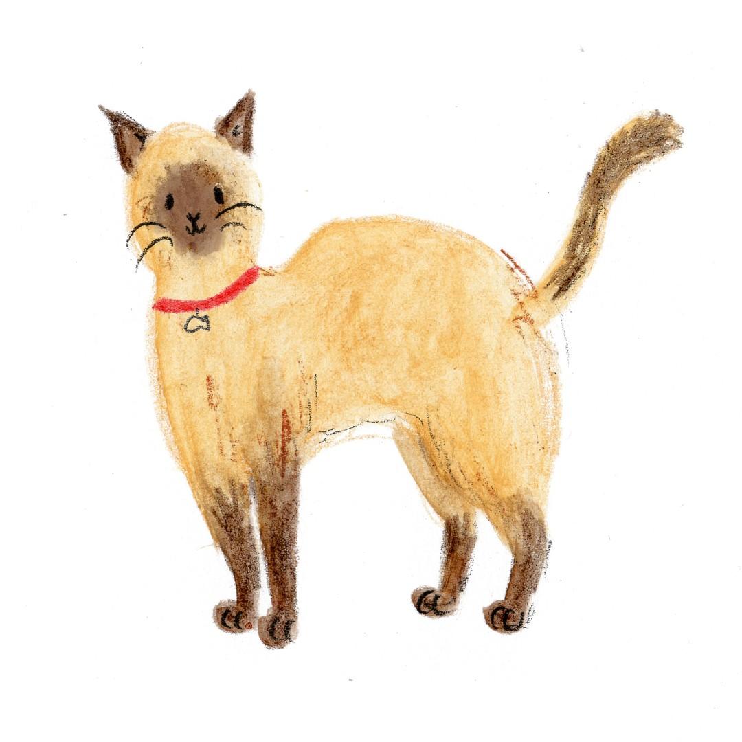 cattt1 (Large)