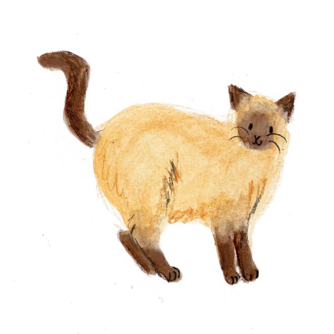 catttt (Large)