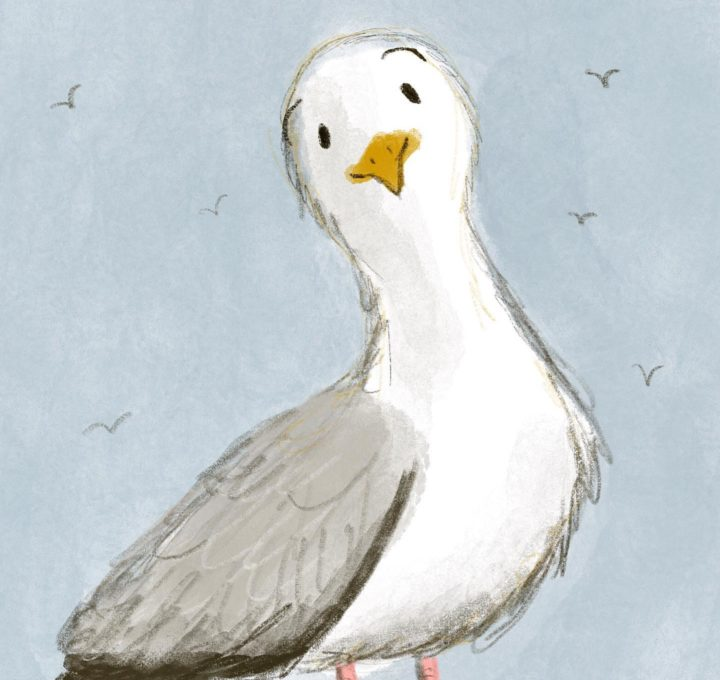 Seagull Lucy Dillamore Illustration