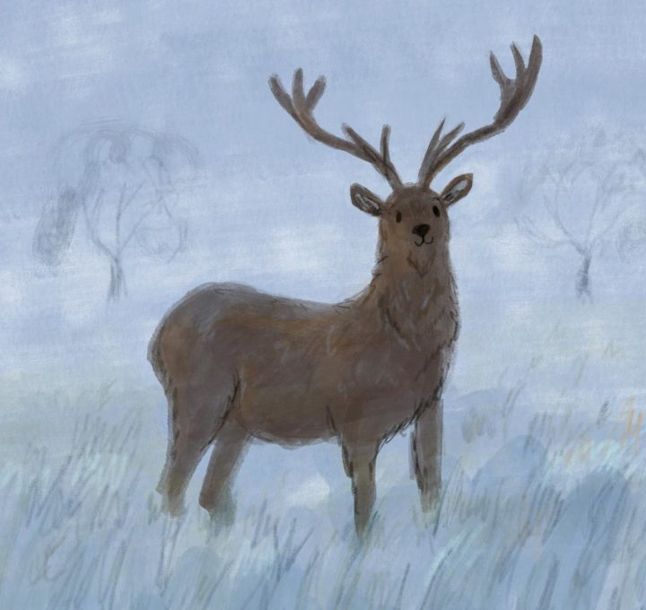 Winter Deer Lucy Dillamore Illustrator