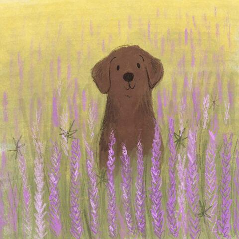 Labrador lavender field Lucy Dillamore