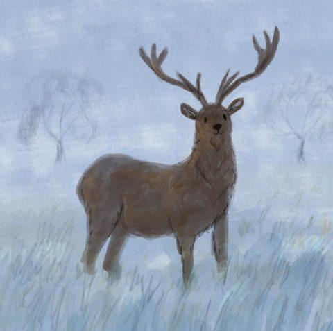 Winter Deer Lucy Dillamore Illustrator